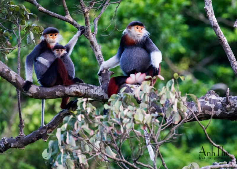 Phong Nha - Ke Bang National Park - Not a single place suits Bird Watching Holidays than this
