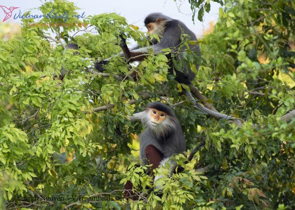 15-Days-for-Birds-Watching-and-Primates-Photography-Tour-in-Vietnam-11