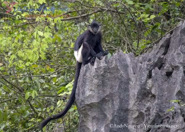 15-Days-for-Birds-Watching-and-Primates-Photography-Tour-in-Vietnam-12