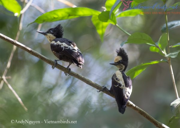 15-Days-for-Birds-Watching-and-Primates-Photography-Tour-in-Vietnam-18
