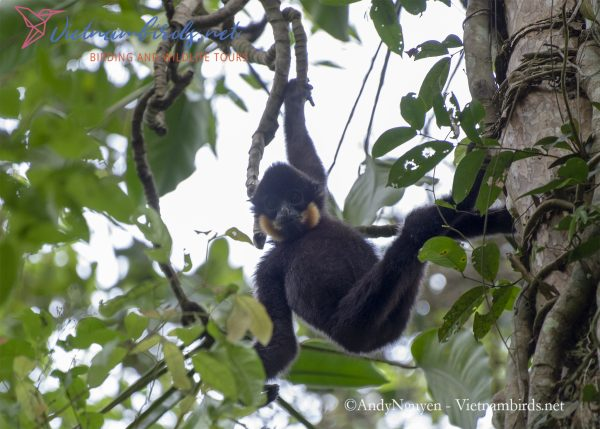 15-Days-for-Birds-Watching-and-Primates-Photography-Tour-in-Vietnam-25