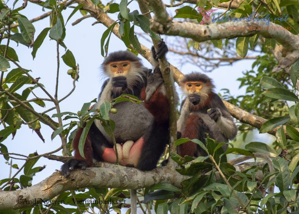 15-Days-for-Birds-Watching-and-Primates-Photography-Tour-in-Vietnam-28