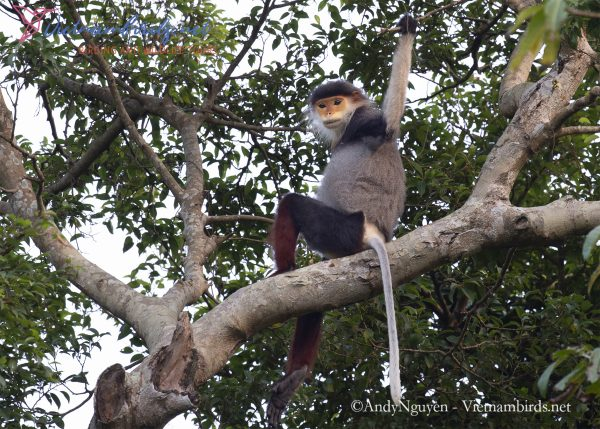 15-Days-for-Birds-Watching-and-Primates-Photography-Tour-in-Vietnam-29