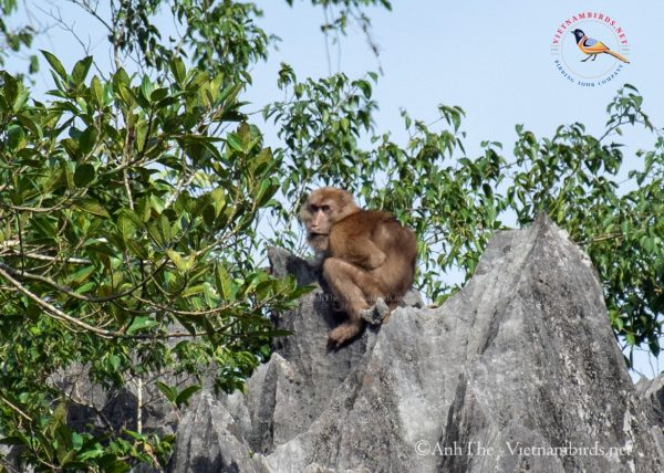 15-Days-for-Birds-Watching-and-Primates-Photography-Tour-in-Vietnam-3