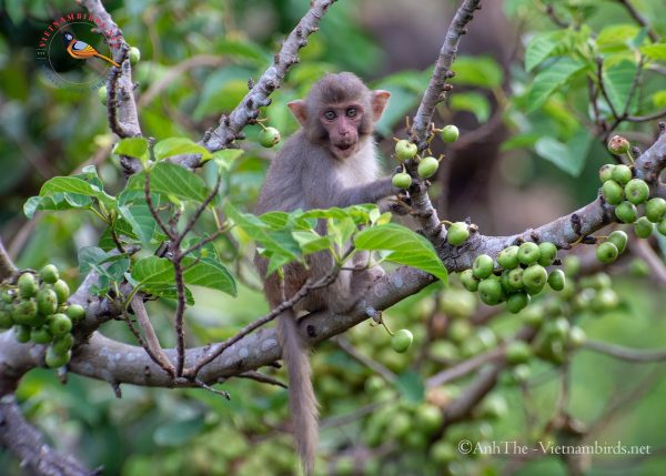 15-Days-for-Birds-Watching-and-Primates-Photography-Tour-in-Vietnam-4