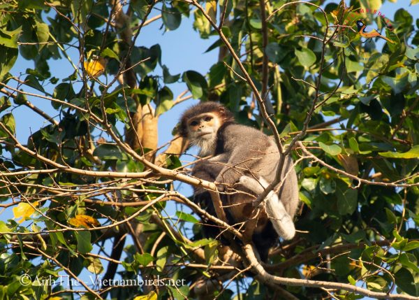 15-Days-for-Birds-Watching-and-Primates-Photography-Tour-in-Vietnam-5