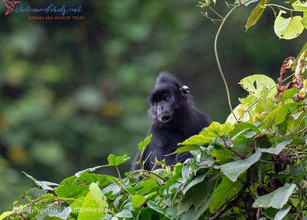 15-Days-for-Birds-Watching-and-Primates-Photography-Tour-in-Vietnam-6