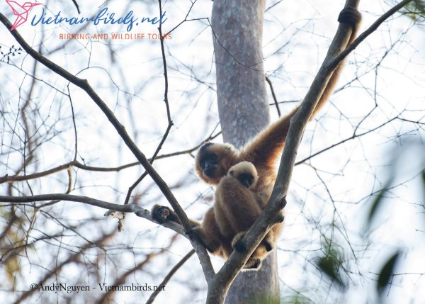 15-Days-for-Birds-Watching-and-Primates-Photography-Tour-in-Vietnam-9