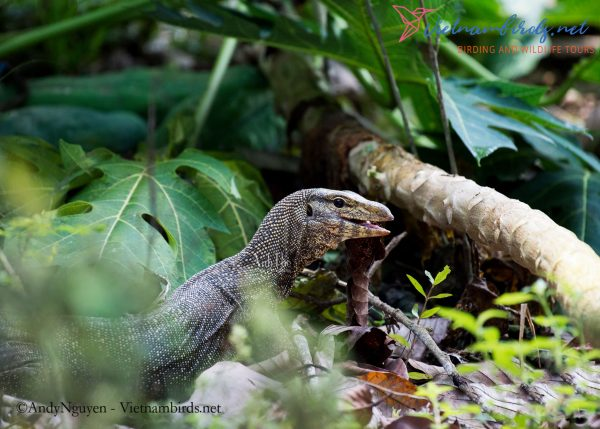 4-Days-Herping-Tour-in-the-Dong-Nai-Nature-Reserve-and-Cat-Tien-National-Park-2