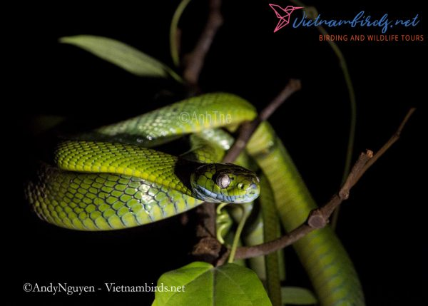 4-Days-Herping-Tour-in-the-Dong-Nai-Nature-Reserve-and-Cat-Tien-National-Park-4