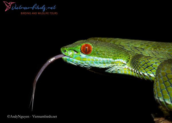 4-Days-Herping-Tour-in-the-Dong-Nai-Nature-Reserve-and-Cat-Tien-National-Park-5