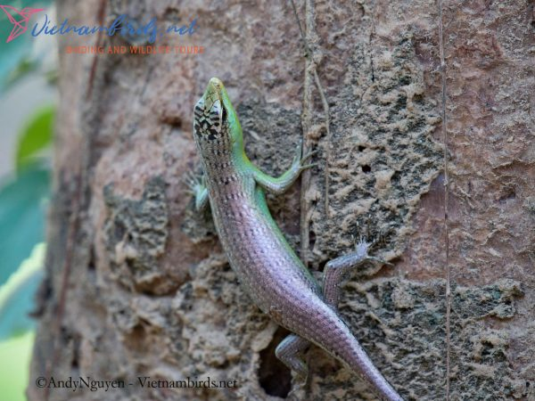 4-Days-Herping-Tour-in-the-Dong-Nai-Nature-Reserve-and-Cat-Tien-National-Park-8