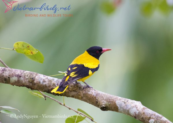 4-Days-for-Birding-and-Spotlighting-Tour-in-Cat-Tien-National-Park-13