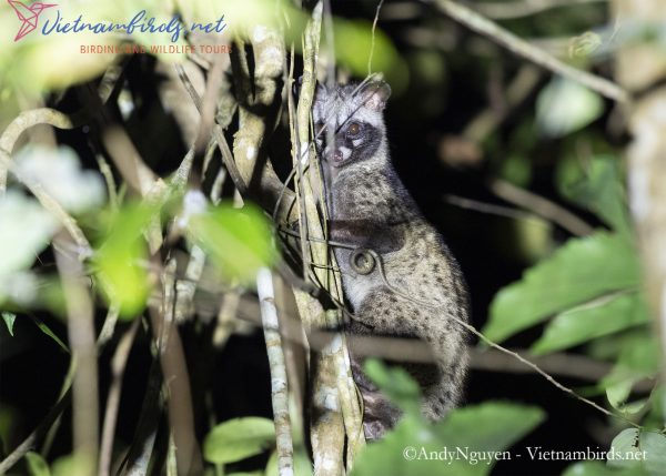 4-Days-for-Birding-and-Spotlighting-Tour-in-Cat-Tien-National-Park-16