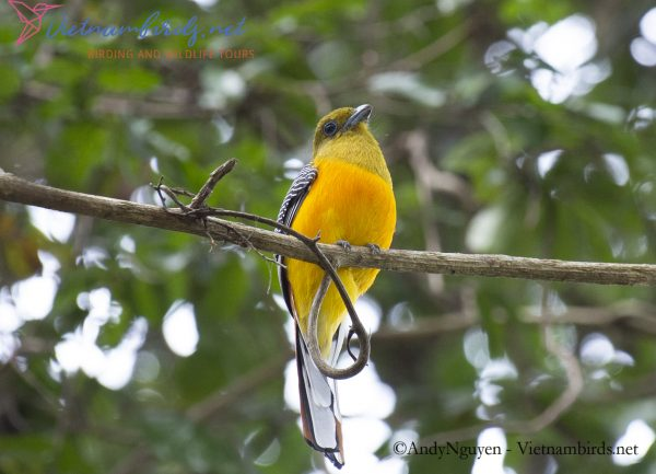 4-Days-for-Birding-and-Spotlighting-Tour-in-Cat-Tien-National-Park-18