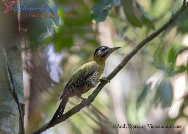 4-days-for-bird-watching-tour-in-cat-tien-national-park