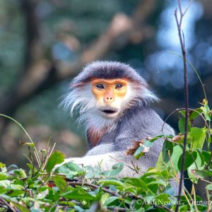 5-Days-for-Primates-Photography-Tour-in-the-Central-of-Vietnam-1