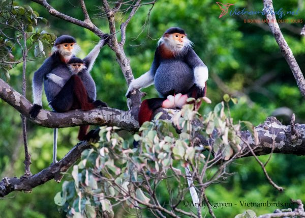 5-Days-for-Primates-Photography-Tour-in-the-Central-of-Vietnam-2