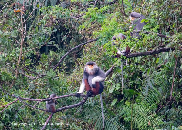 5-Days-for-Primates-Photography-Tour-in-the-Central-of-Vietnam-3