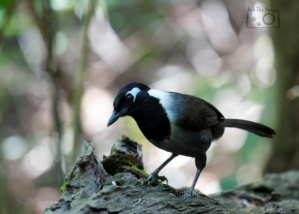 What type of birds can we find during bird watching in Di Linh?
