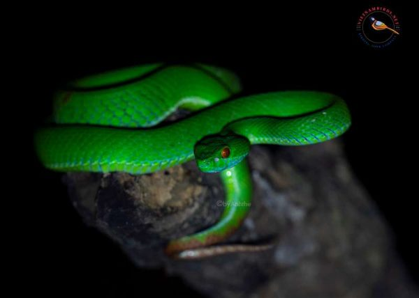 8 days – Herping tour in South Vietnam