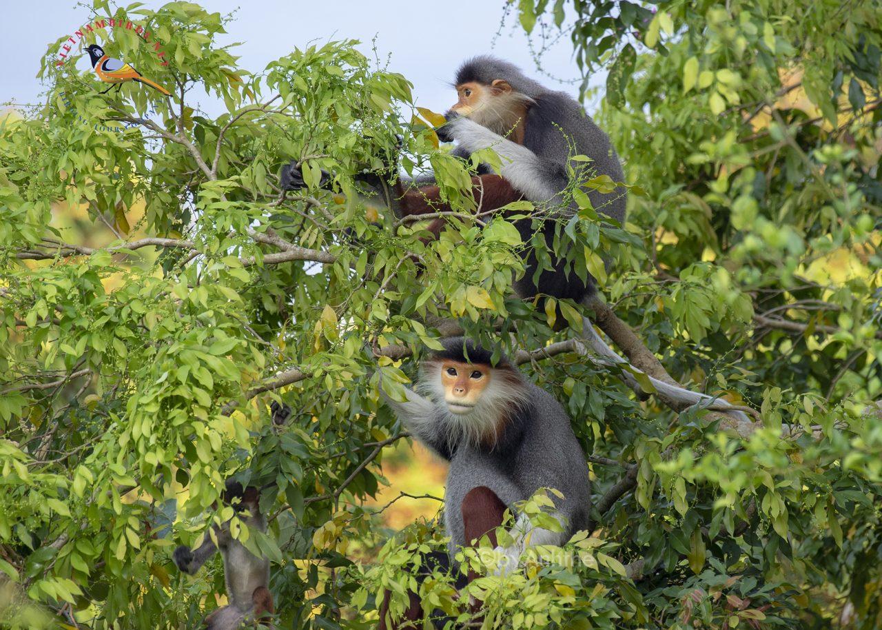 Vietnam Wildlife Tours