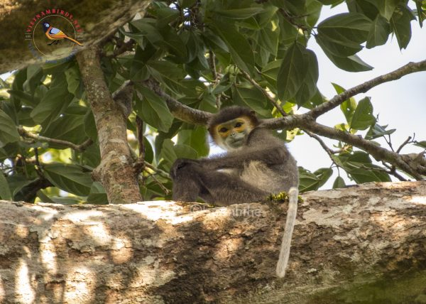 8-days-primates-photography-tour-in-south-vietnam