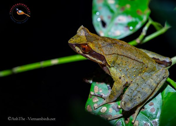 8-days-for-herping-tour-in-South-Vietnam-9