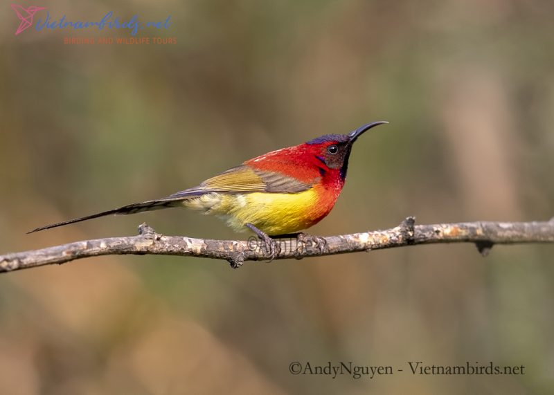 Bird Watching and Bird Photography Tours in Fansipan Mountain Area