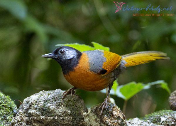 Sa Mu Pass Bird Watching And Wildlife Photography Tours