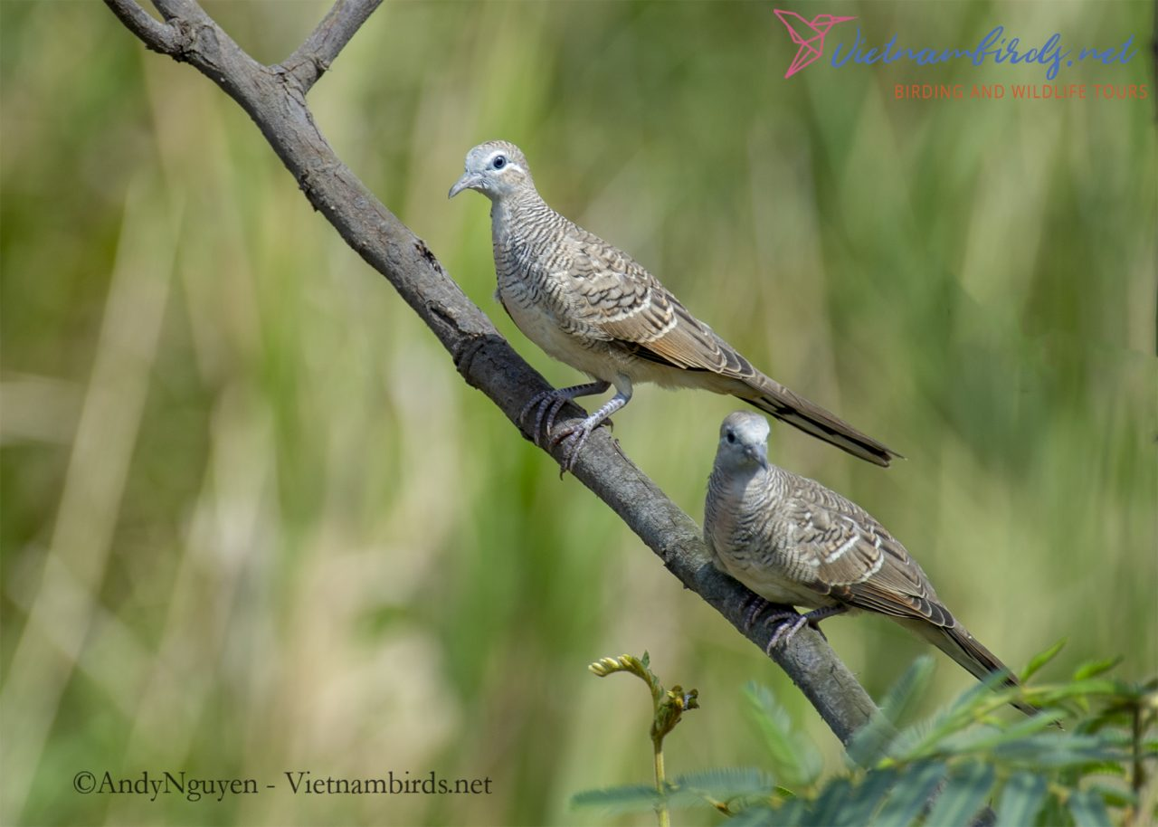 12 Days for Birds Watching and Birds Photography in The Southern and Central Highland of Vietnam