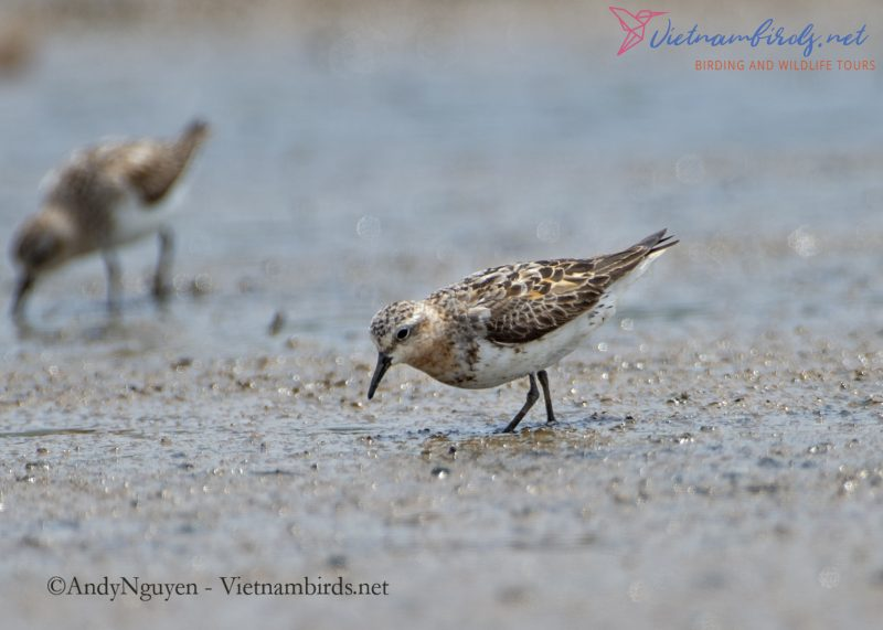 Code of Birding Ethics in Vietnam Teritory