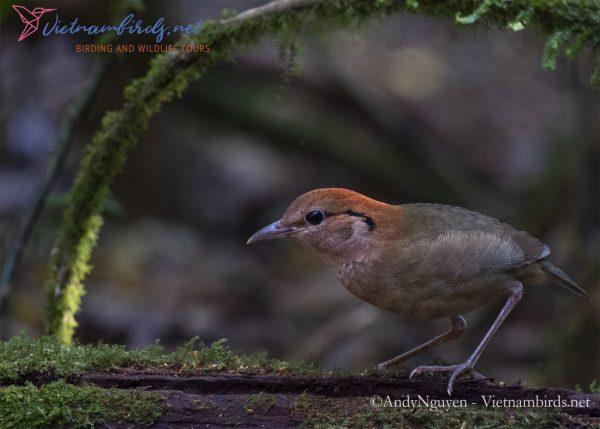 Bird Watching Holidays by Vietnambirds.net
