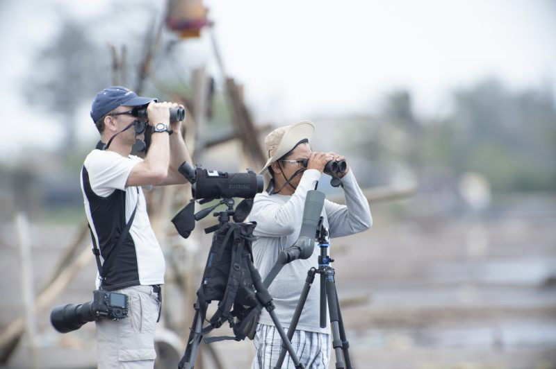 Bird Watching and Wildlife Tours in Can Gio Coast