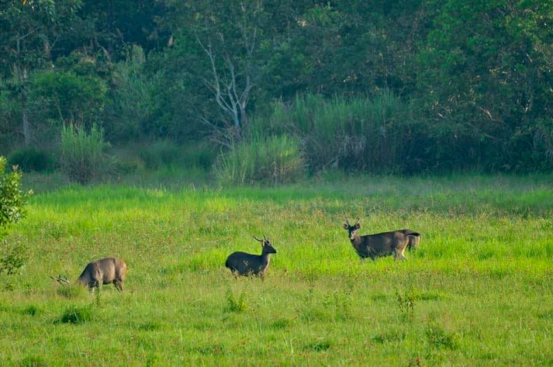 •Cat Tien is one of the most important sites in Vietnam for the conservation of large mammals
