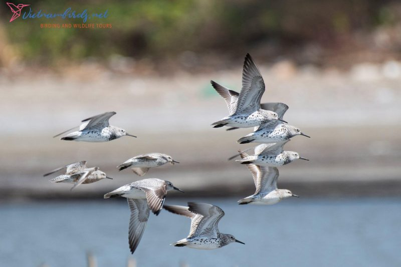 Bird Watching and Wildlife Tours in Go Cong Coast