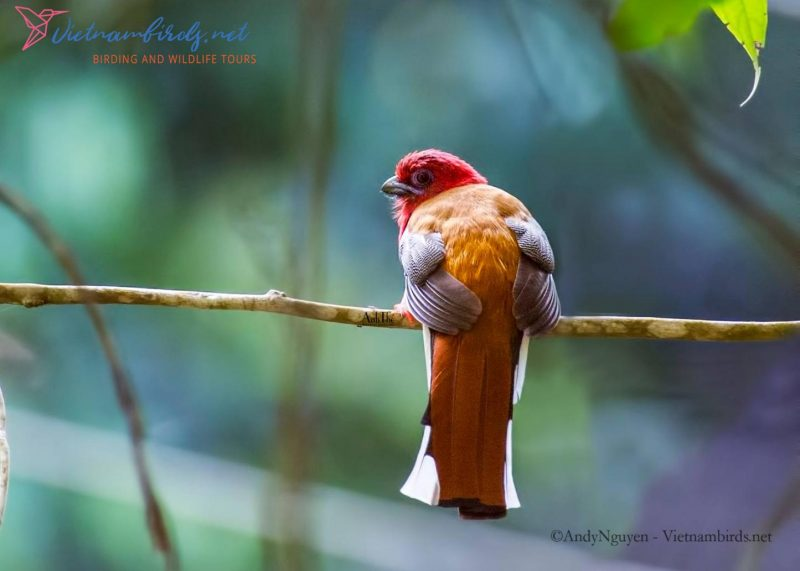 Best places to go bird watching and take photographies in Vietnam