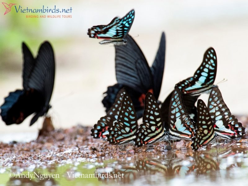 Butterflies in Cat tien NP, Picture was shot at 29Mar2021