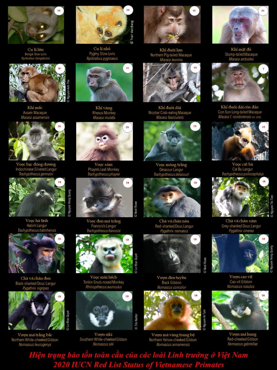 25 primates species in Vietnam – by Prof Hoang Minh Duc