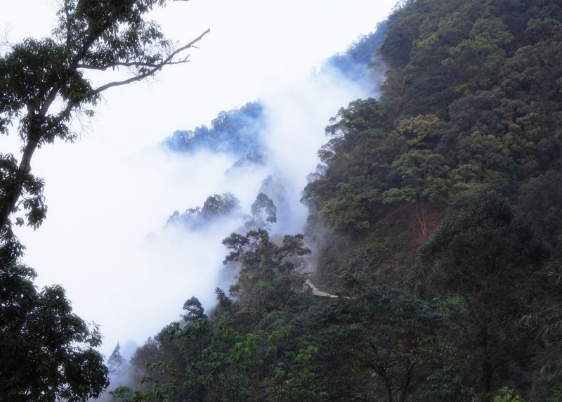 Picture of the trail in Bach Ma National Park – Hoang Nhu Phuong