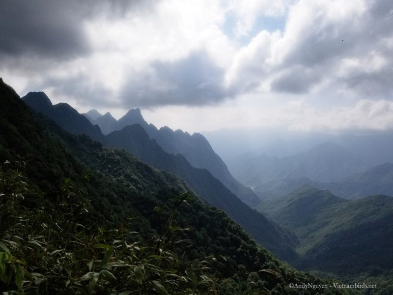 The trail on the Fansipan mountain , Hoang Lien National park.