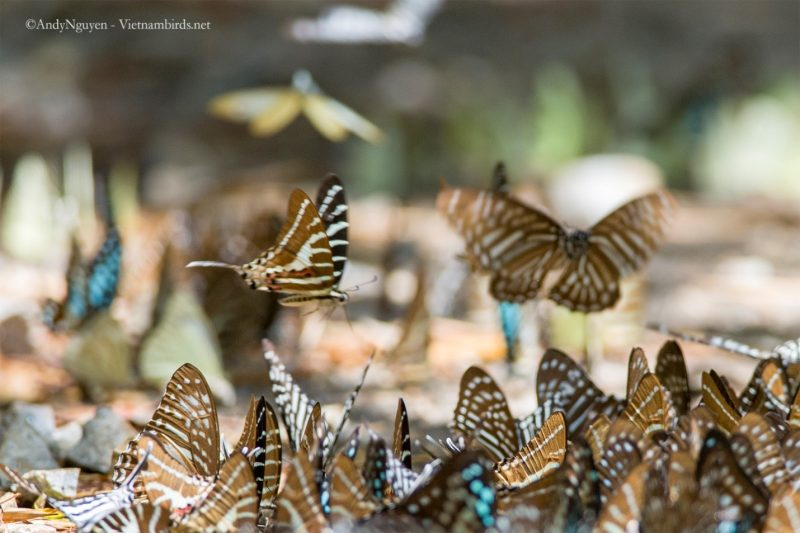 A butterfly party